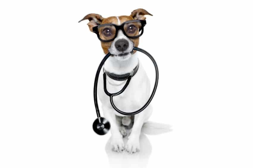 probiotics and pet health