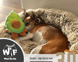 WTF #30 – Scoot, the Keto Pup