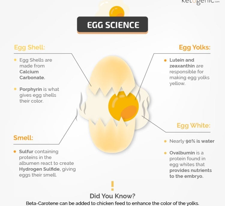 Egg Science Facts