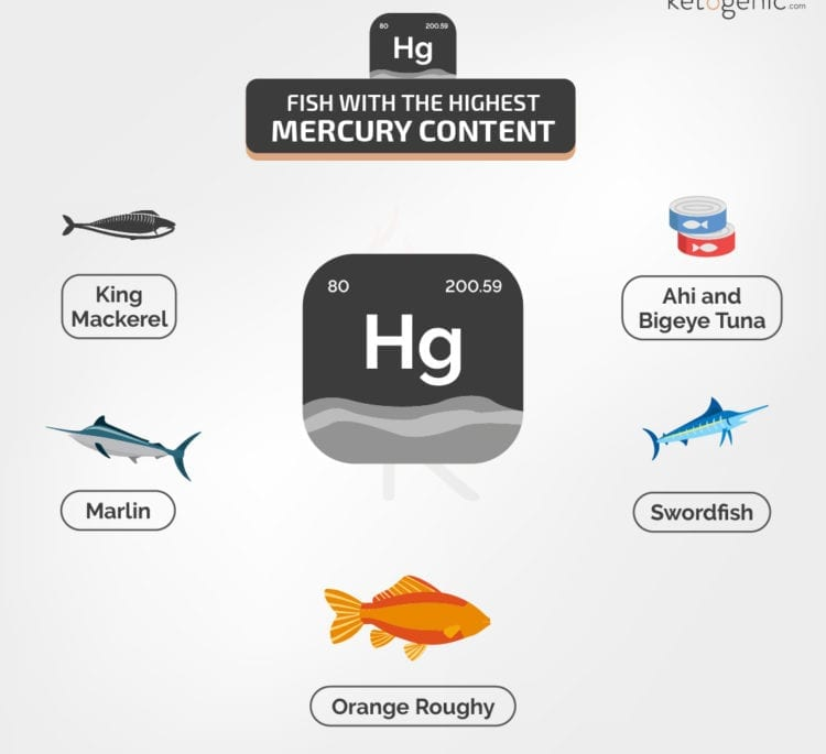 Fish with the Most Mercury