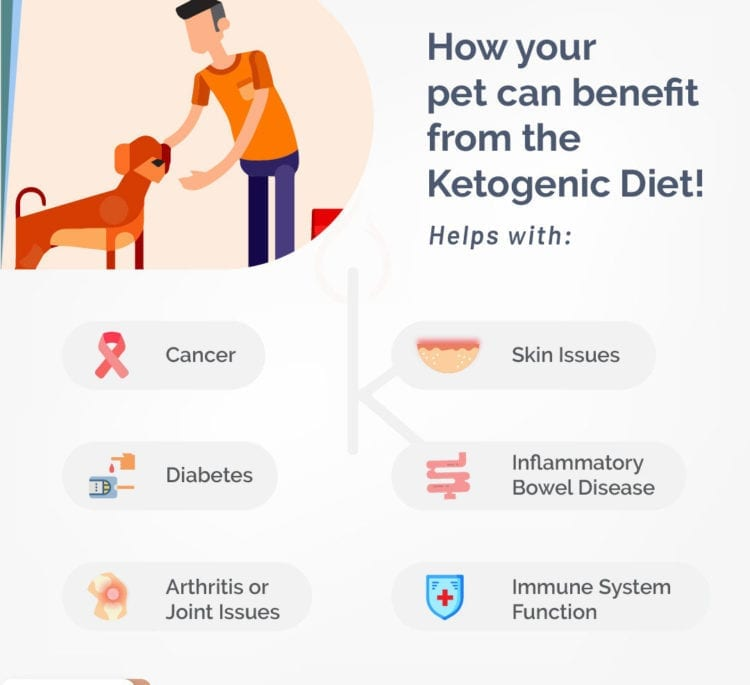 Benefits of Keto Diet for Your Pet