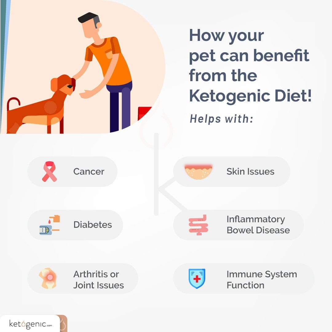 benefits of keto diet for your dog