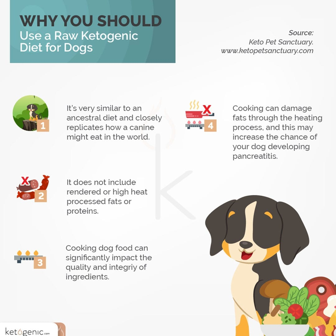 Raw Food Keto Diet for Your Dog