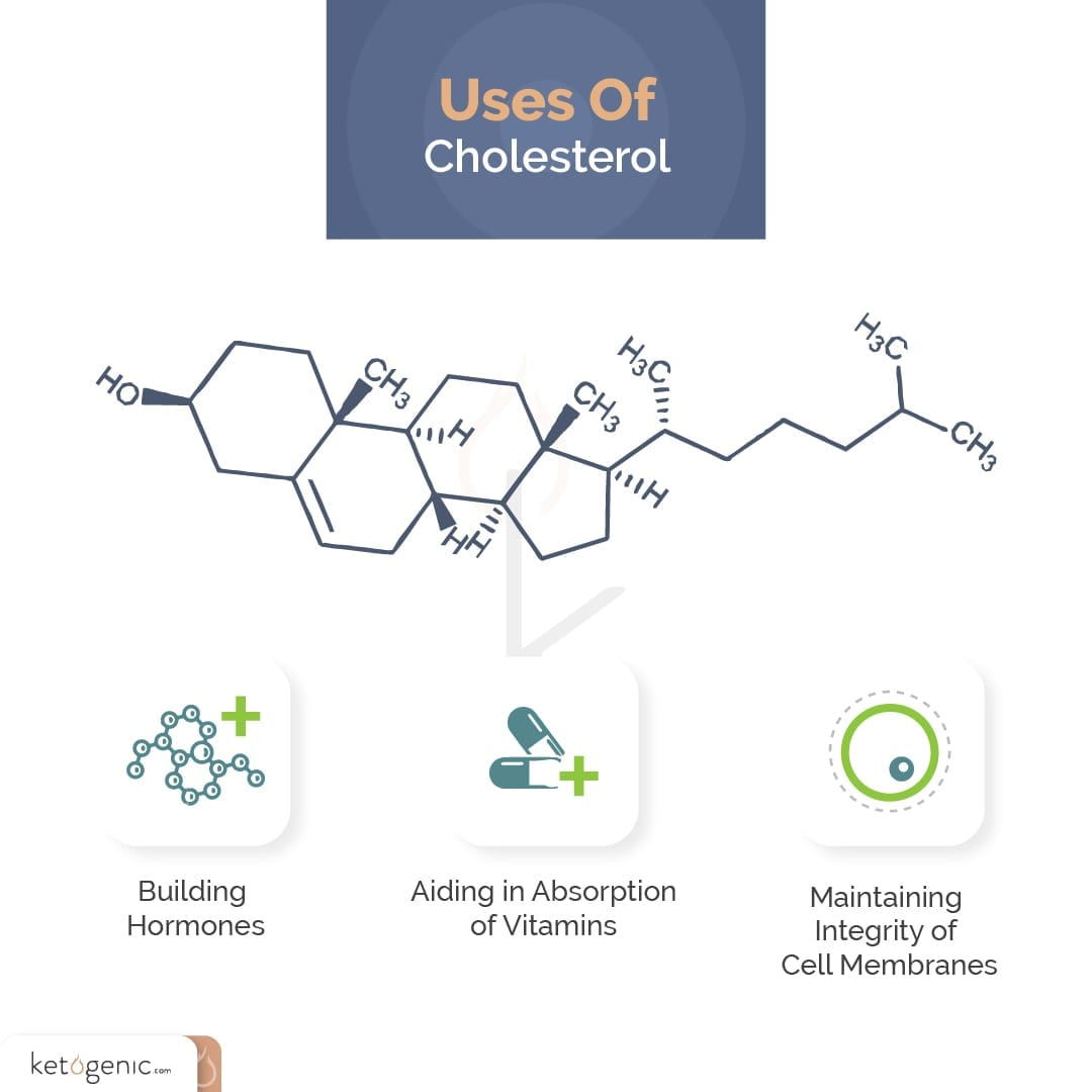Cholesterol Benefits and Functions