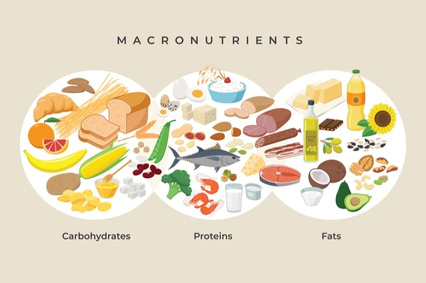 What Are Macros & How Are They Calculated?