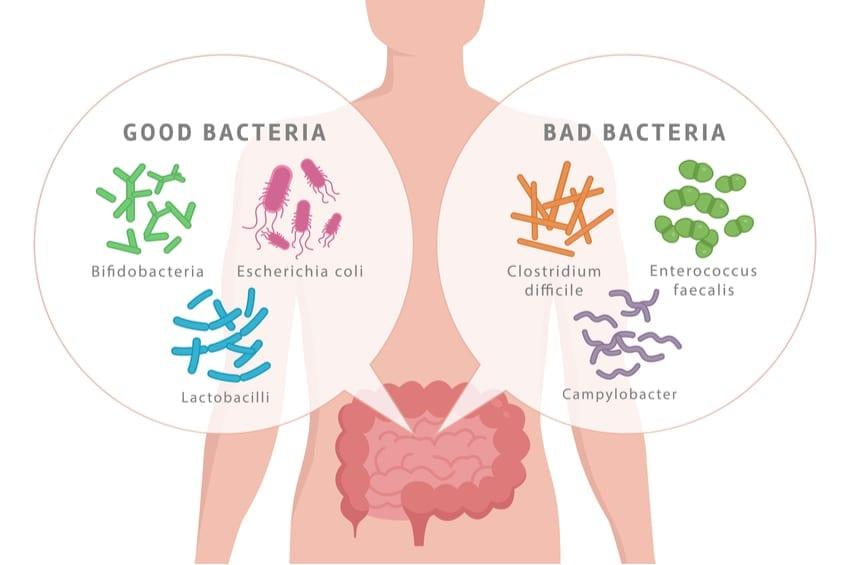 dysbiosis keto leac bun pentru viermi
