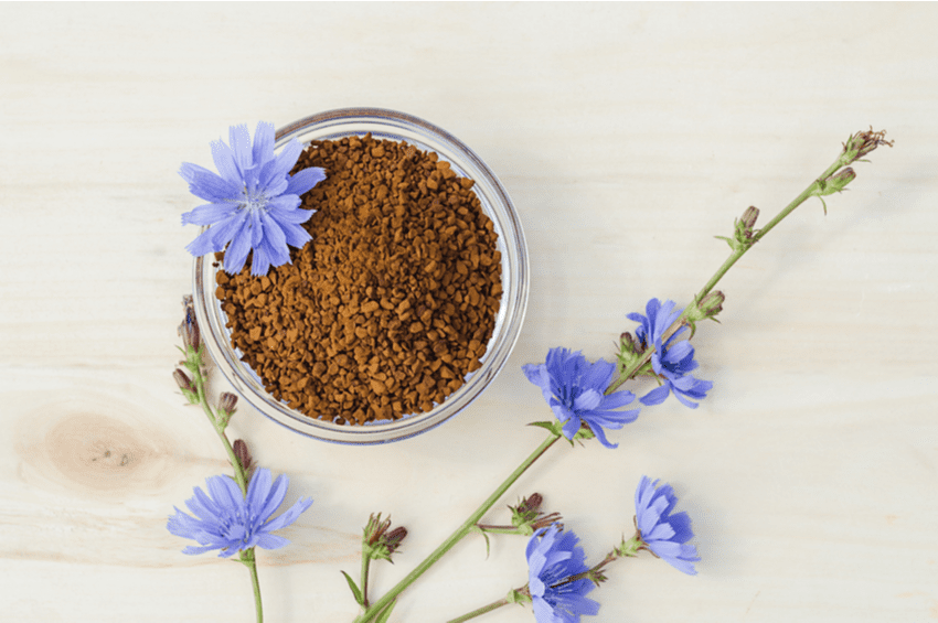 what is chicory root