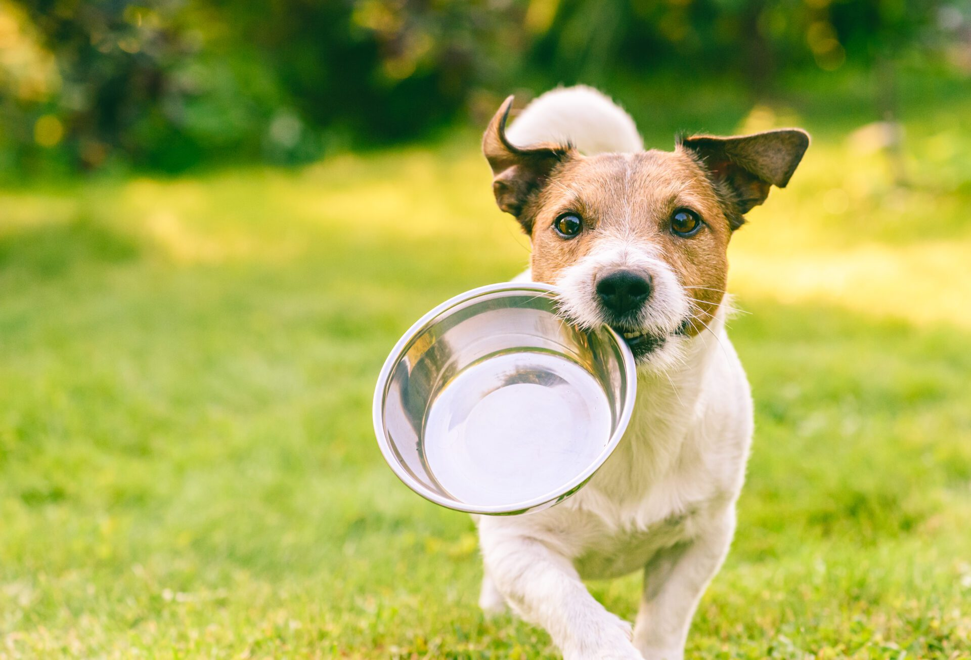 Benefits of a Ketogenic Diet for Dogs!